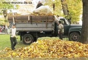 Вывоз листьев